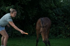 Pferd-Rose-Steffi-K