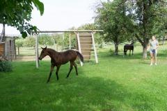 Pferd-Rose-Steffi-Krieger-10