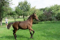 Pferd-Rose-Steffi-Krieger-11