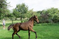 Pferd-Rose-Steffi-Krieger-12
