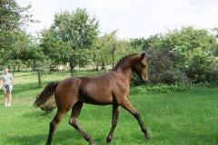 Pferd-Rose-Steffi-Krieger-13