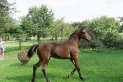 Pferd-Rose-Steffi-Krieger-14