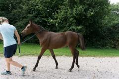 Pferd-Rose-Steffi-Krieger-19