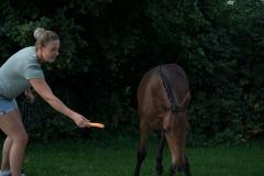 Pferd-Rose-Steffi-Krieger-2