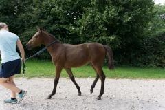 Pferd-Rose-Steffi-Krieger-20