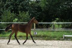 Pferd-Rose-Steffi-Krieger-21
