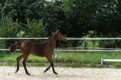 Pferd-Rose-Steffi-Krieger-22