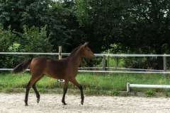 Pferd-Rose-Steffi-Krieger-24