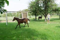 Pferd-Rose-Steffi-Krieger-5