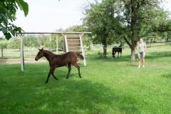 Pferd-Rose-Steffi-Krieger-6