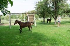 Pferd-Rose-Steffi-Krieger-7