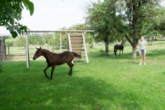 Pferd-Rose-Steffi-Krieger-8