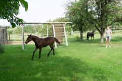 Pferd-Rose-Steffi-Krieger-9